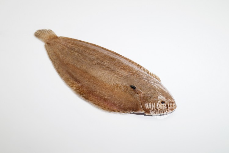 Whole Dover sole