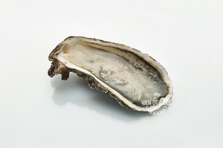 Pacific Oyster