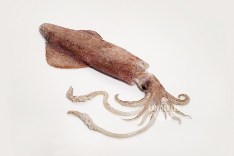 Whole squid